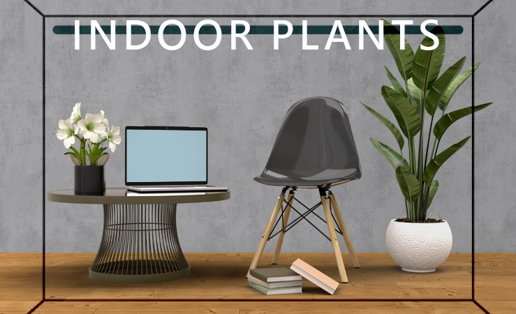 7 Different Ways to Indoor Plants Decoration Ideas in Living Room