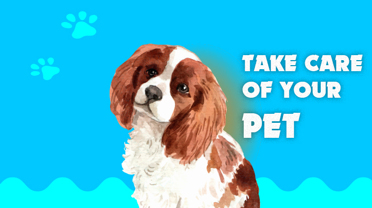 Tips to Take Care of Your Pet
