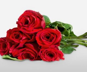 Red Bloomed Roses